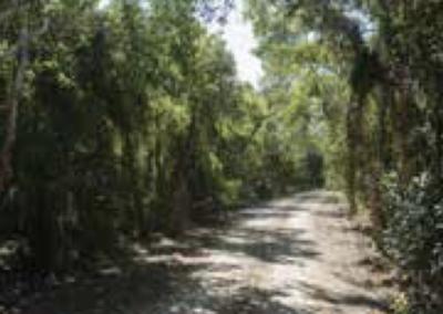cape palmerston np walking trails